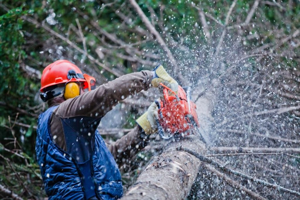 Chula Vista-Coronado CA Tree Trimming and Stump Grinding Services-We Offer Tree Trimming Services, Tree Removal, Tree Pruning, Tree Cutting, Residential and Commercial Tree Trimming Services, Storm Damage, Emergency Tree Removal, Land Clearing, Tree Companies, Tree Care Service, Stump Grinding, and we're the Best Tree Trimming Company Near You Guaranteed!