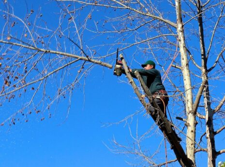 Contact Us-Coronado CA Tree Trimming and Stump Grinding Services-We Offer Tree Trimming Services, Tree Removal, Tree Pruning, Tree Cutting, Residential and Commercial Tree Trimming Services, Storm Damage, Emergency Tree Removal, Land Clearing, Tree Companies, Tree Care Service, Stump Grinding, and we're the Best Tree Trimming Company Near You Guaranteed!