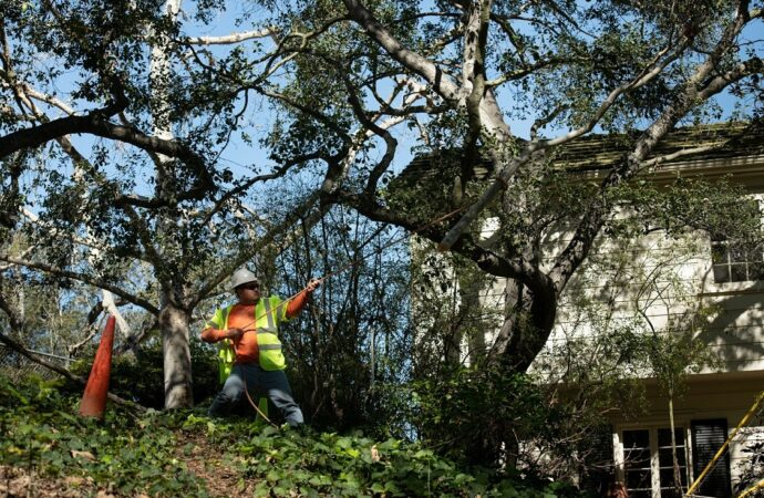 National City-Coronado CA Tree Trimming and Stump Grinding Services-We Offer Tree Trimming Services, Tree Removal, Tree Pruning, Tree Cutting, Residential and Commercial Tree Trimming Services, Storm Damage, Emergency Tree Removal, Land Clearing, Tree Companies, Tree Care Service, Stump Grinding, and we're the Best Tree Trimming Company Near You Guaranteed!