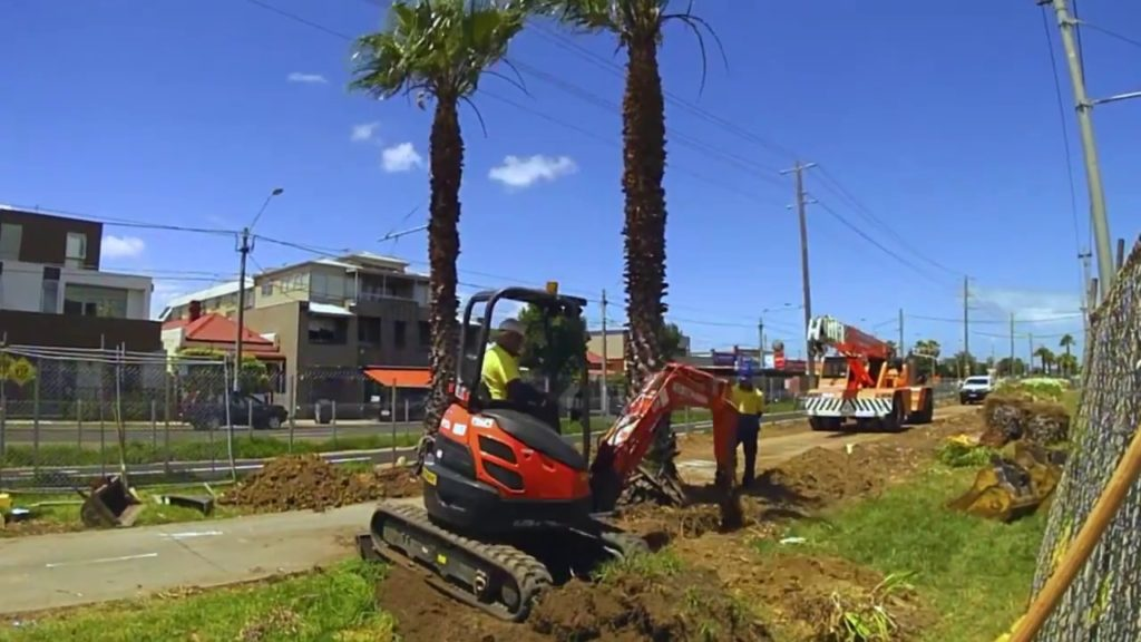 Palm Tree Removal-Coronado CA Tree Trimming and Stump Grinding Services-We Offer Tree Trimming Services, Tree Removal, Tree Pruning, Tree Cutting, Residential and Commercial Tree Trimming Services, Storm Damage, Emergency Tree Removal, Land Clearing, Tree Companies, Tree Care Service, Stump Grinding, and we're the Best Tree Trimming Company Near You Guaranteed!