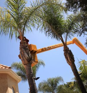 Palm Tree Trimming-Coronado CA Tree Trimming and Stump Grinding Services-We Offer Tree Trimming Services, Tree Removal, Tree Pruning, Tree Cutting, Residential and Commercial Tree Trimming Services, Storm Damage, Emergency Tree Removal, Land Clearing, Tree Companies, Tree Care Service, Stump Grinding, and we're the Best Tree Trimming Company Near You Guaranteed!