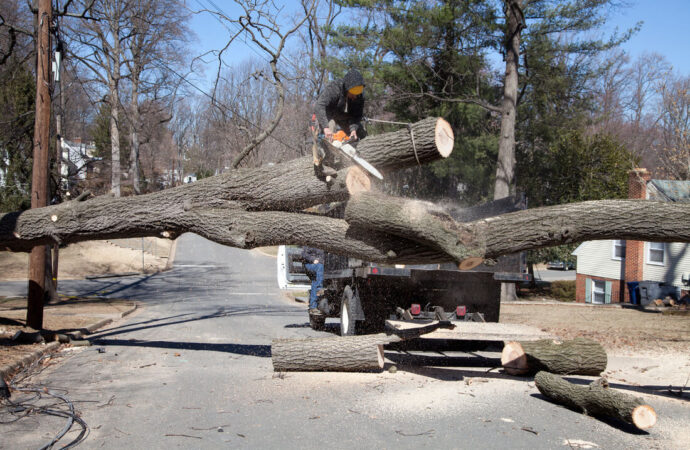 Residential Tree Services-Coronado CA Tree Trimming and Stump Grinding Services-We Offer Tree Trimming Services, Tree Removal, Tree Pruning, Tree Cutting, Residential and Commercial Tree Trimming Services, Storm Damage, Emergency Tree Removal, Land Clearing, Tree Companies, Tree Care Service, Stump Grinding, and we're the Best Tree Trimming Company Near You Guaranteed!