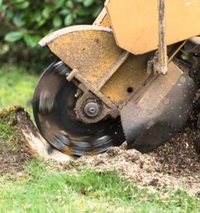 Stump Grinding-Coronado CA Tree Trimming and Stump Grinding Services-We Offer Tree Trimming Services, Tree Removal, Tree Pruning, Tree Cutting, Residential and Commercial Tree Trimming Services, Storm Damage, Emergency Tree Removal, Land Clearing, Tree Companies, Tree Care Service, Stump Grinding, and we're the Best Tree Trimming Company Near You Guaranteed!