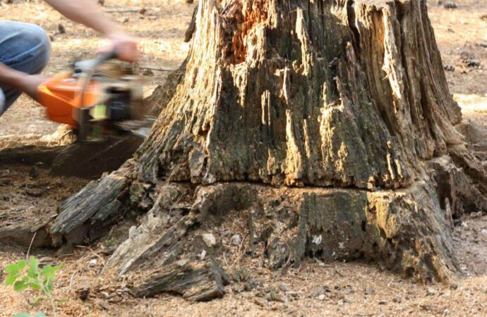 Stump Removal-Coronado CA Tree Trimming and Stump Grinding Services-We Offer Tree Trimming Services, Tree Removal, Tree Pruning, Tree Cutting, Residential and Commercial Tree Trimming Services, Storm Damage, Emergency Tree Removal, Land Clearing, Tree Companies, Tree Care Service, Stump Grinding, and we're the Best Tree Trimming Company Near You Guaranteed!