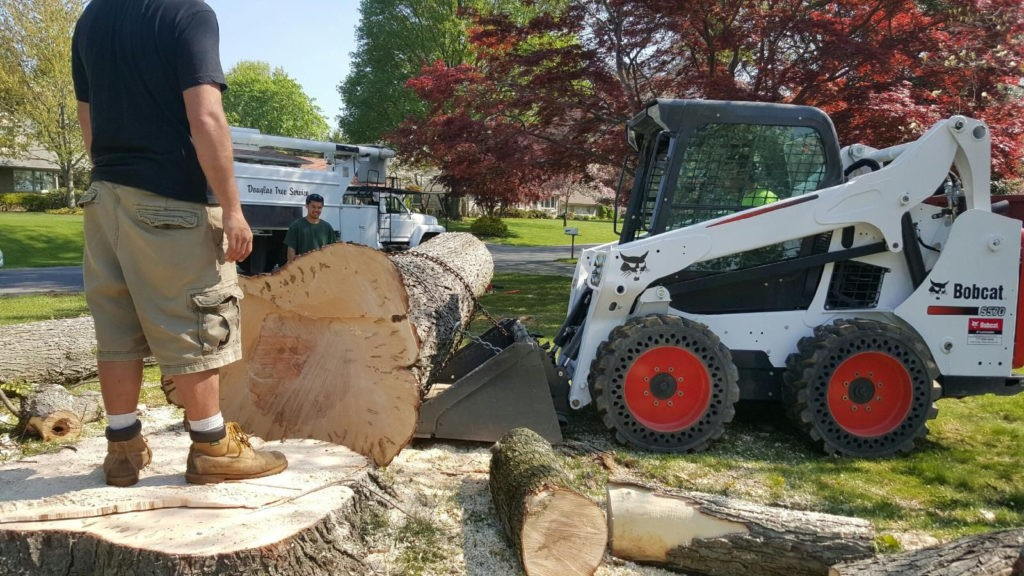 Sunset Cliffs-Coronado CA Tree Trimming and Stump Grinding Services-We Offer Tree Trimming Services, Tree Removal, Tree Pruning, Tree Cutting, Residential and Commercial Tree Trimming Services, Storm Damage, Emergency Tree Removal, Land Clearing, Tree Companies, Tree Care Service, Stump Grinding, and we're the Best Tree Trimming Company Near You Guaranteed!