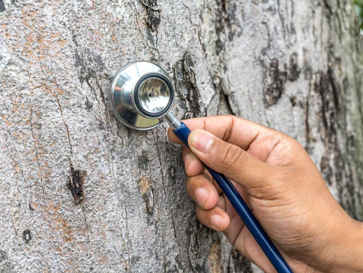 Tree Assessments-Coronado CA Tree Trimming and Stump Grinding Services-We Offer Tree Trimming Services, Tree Removal, Tree Pruning, Tree Cutting, Residential and Commercial Tree Trimming Services, Storm Damage, Emergency Tree Removal, Land Clearing, Tree Companies, Tree Care Service, Stump Grinding, and we're the Best Tree Trimming Company Near You Guaranteed!