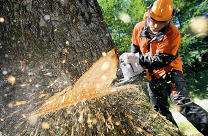 Tree Cutting-Coronado CA Tree Trimming and Stump Grinding Services-We Offer Tree Trimming Services, Tree Removal, Tree Pruning, Tree Cutting, Residential and Commercial Tree Trimming Services, Storm Damage, Emergency Tree Removal, Land Clearing, Tree Companies, Tree Care Service, Stump Grinding, and we're the Best Tree Trimming Company Near You Guaranteed!