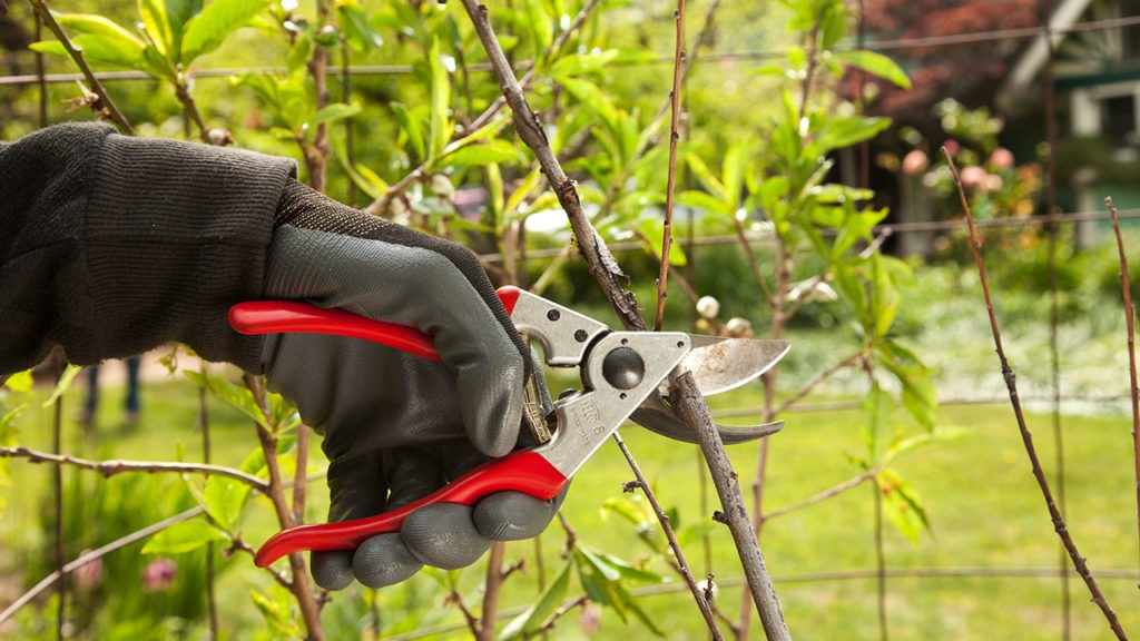 Tree Pruning-Coronado CA Tree Trimming and Stump Grinding Services-We Offer Tree Trimming Services, Tree Removal, Tree Pruning, Tree Cutting, Residential and Commercial Tree Trimming Services, Storm Damage, Emergency Tree Removal, Land Clearing, Tree Companies, Tree Care Service, Stump Grinding, and we're the Best Tree Trimming Company Near You Guaranteed!